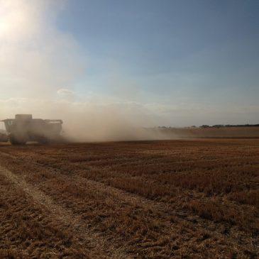 Klägliche Ernte – Sachsen-Anhalts Bauern in Bedrängnis – Tierhalter sind von der Dürre in die Enge getrieben