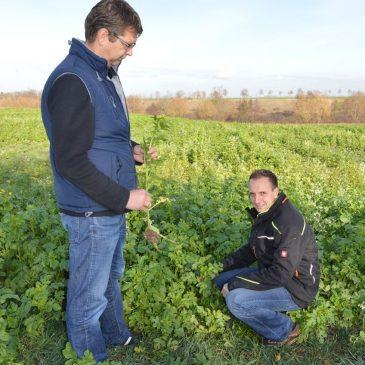 Gesunde Pflanzen und Böden – wohldosierter Pflanzenschutz ist Grundlage des ackerbaulichen Handelns