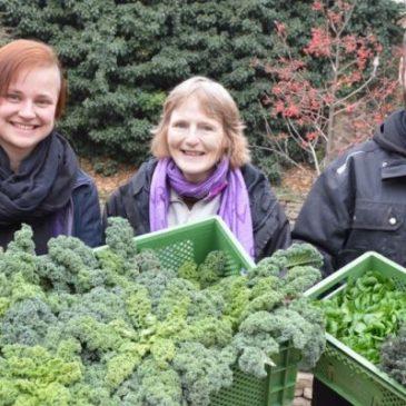 Gemüse-Direktvermarktung – regional, saisonal und Bio: Überraschung im Abonnement aus der Börde-Gärtnerei in Erxleben