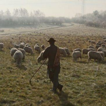 Landesvorstand positioniert sich zur Schaf- und Ziegenhaltung