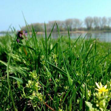 Natura 2000 – Erörterungstermine wahrnehmen