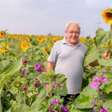 Bauer Möhring und seine zehntausend Sonnenblumen