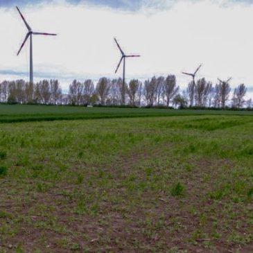 Landwirte gesucht: Projekt für mehr Insekten, Rotmilane, Feldhamster und Feldvögel