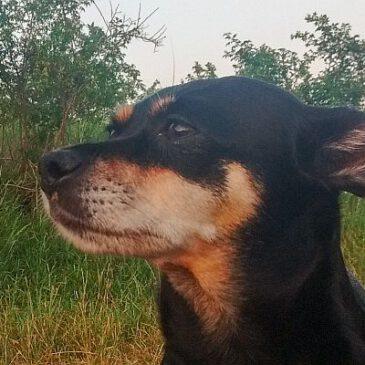 Tierschutzhunde-Verordnung: Von Erfahrungen der Landwirtschaft profitieren