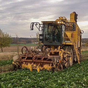 Lohnrodung von Zuckerrüben