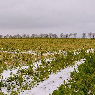 Ökologie auf dem Acker auch im Winter zu sehen
